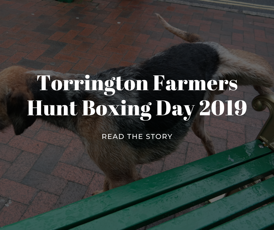 torrington farmers hunt boxing day 2019